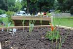 Kolhrabi, Salat und eine kleine Chillipflanze im Lärchenholzhochbeet
